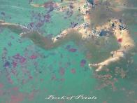 Book of Petals
