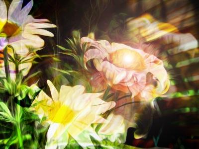 daisy light-2